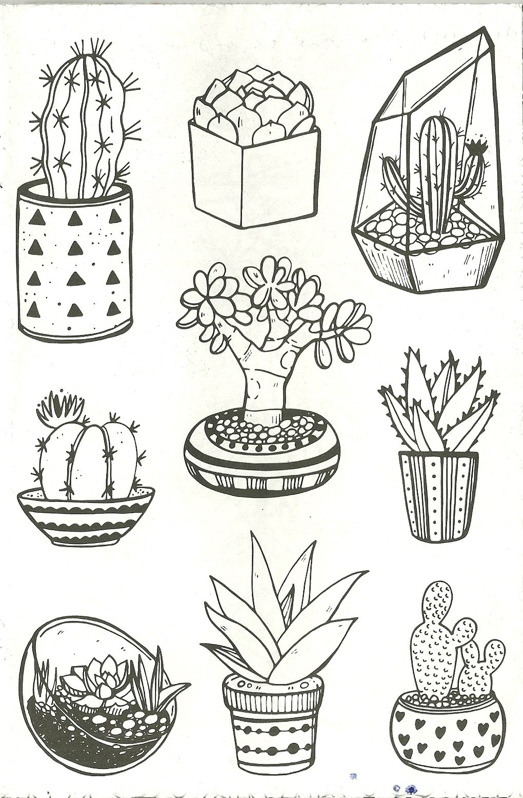 Succulents And Cacti S Coloring Pages Adult Coloring Adult