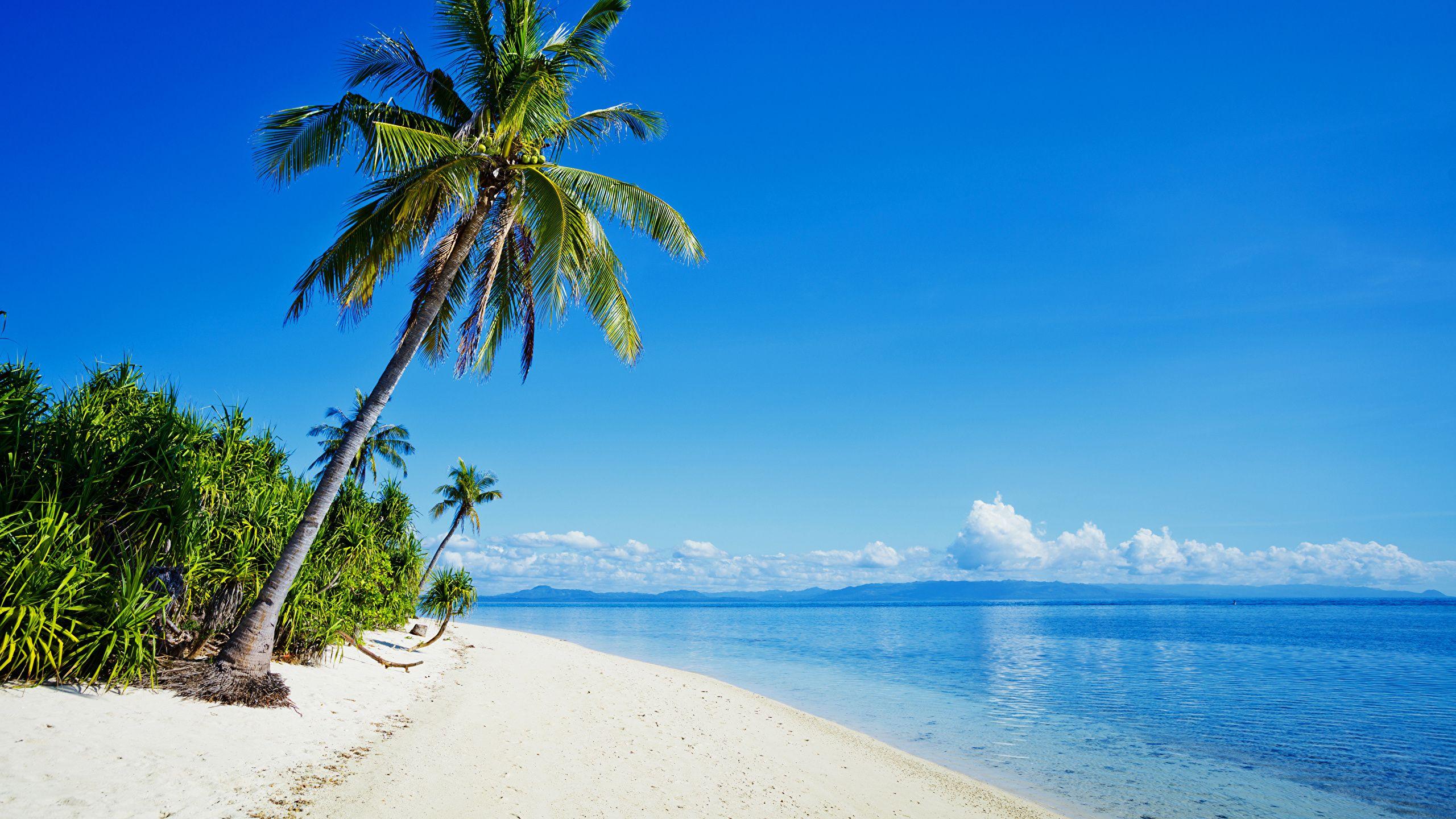 Beach Sands Palm Tree Sea Day Nature Waves Desktop Wallpaper Beach Sunset Wallpaper Philippines Beaches Beach Images