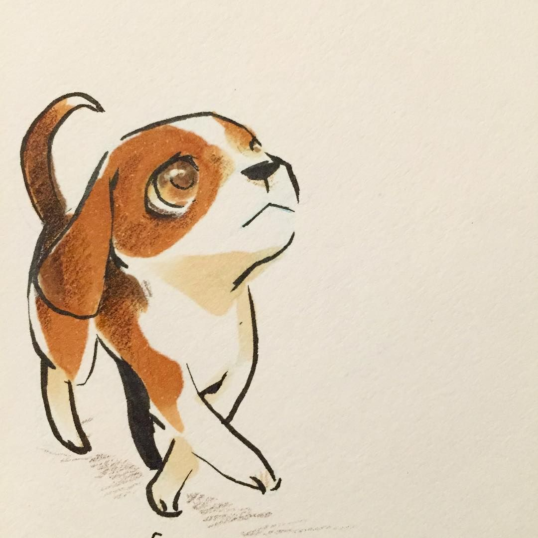 Sketchbook Whatcha Look In At Buddy Dogs Beagle Sketch