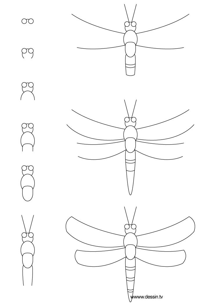 learn how to draw a dragonfly with simple step by step