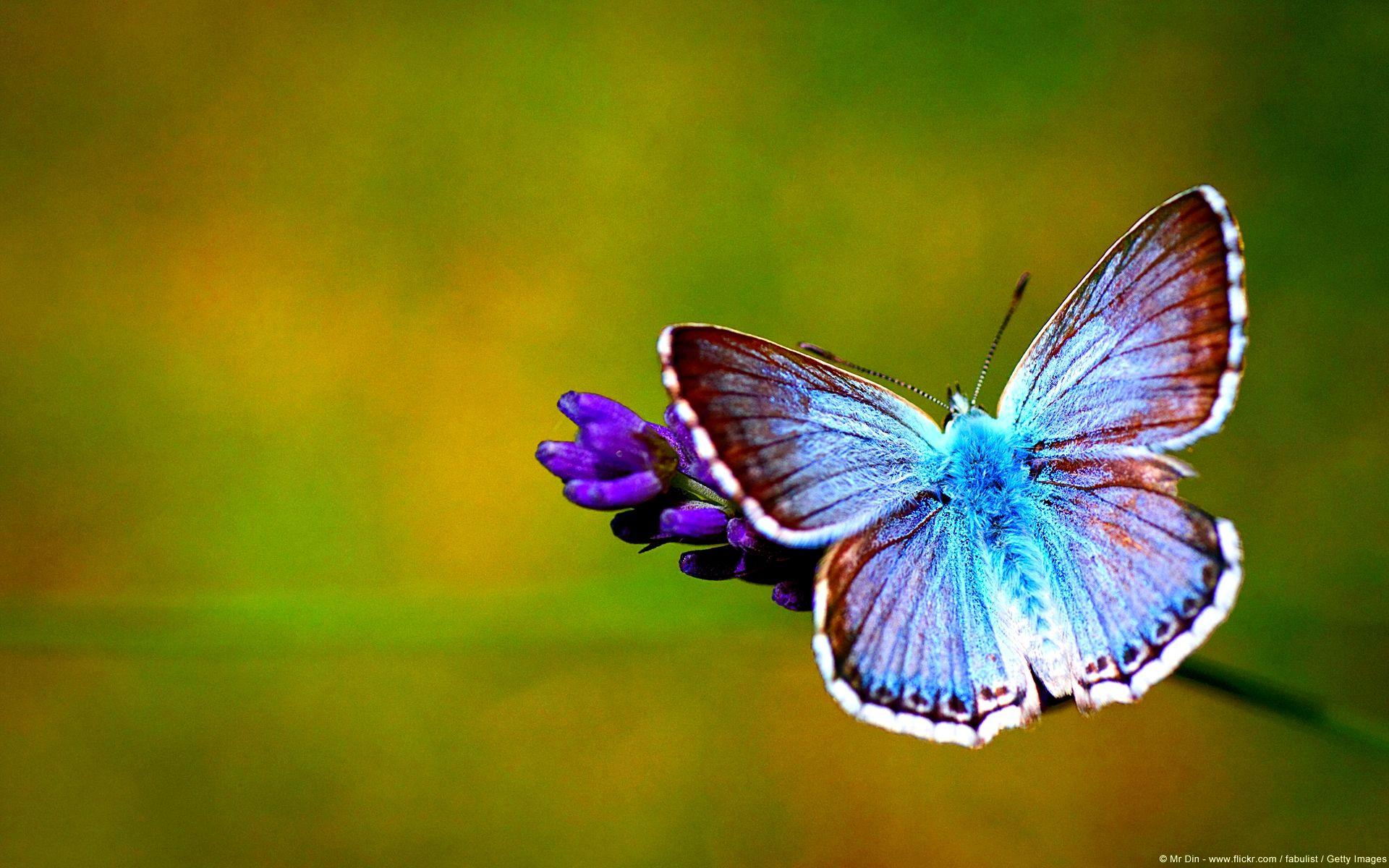 23++ Prettiest butterflies information