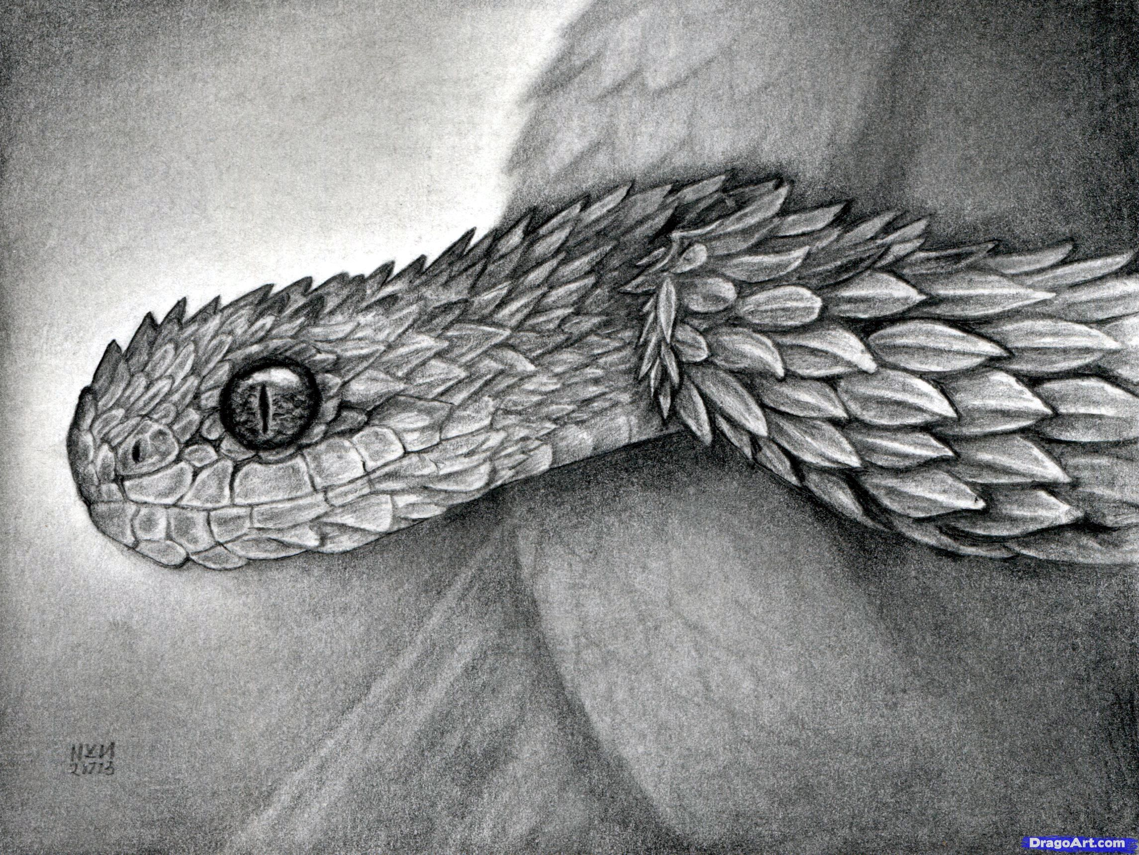 Image Result For How To Draw A Realistic Snake Snake Sketch Snake Drawing Viper Snake