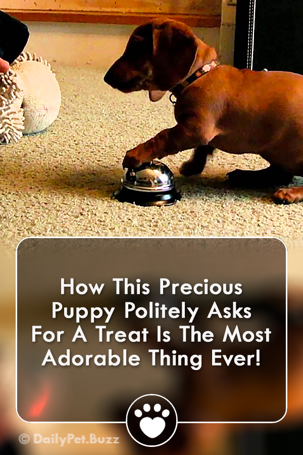 How This Precious Puppy Politely Asks For A Treat Is The