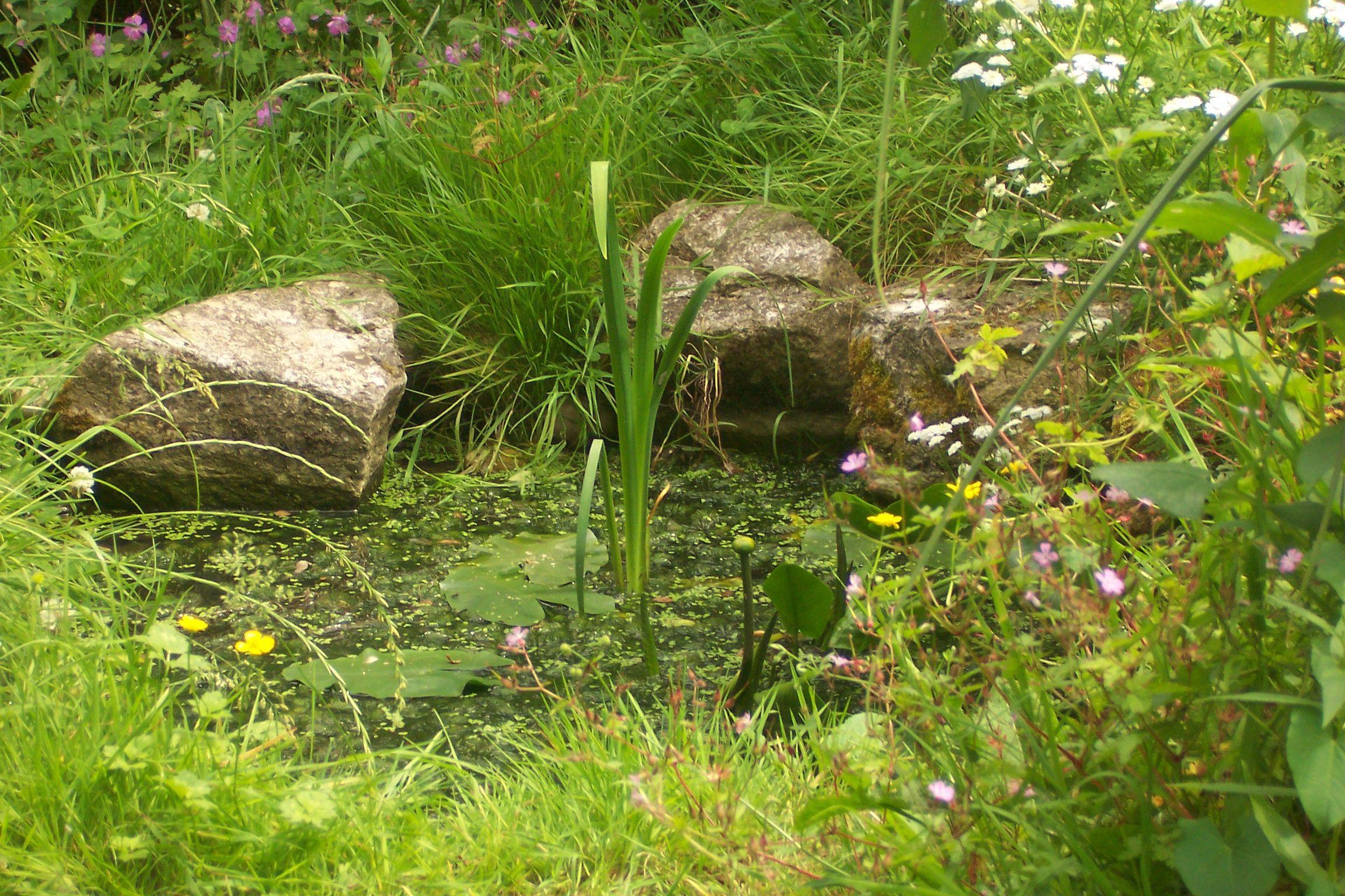 Small wildlife pond google search ponds ponds for for Natural garden pond design