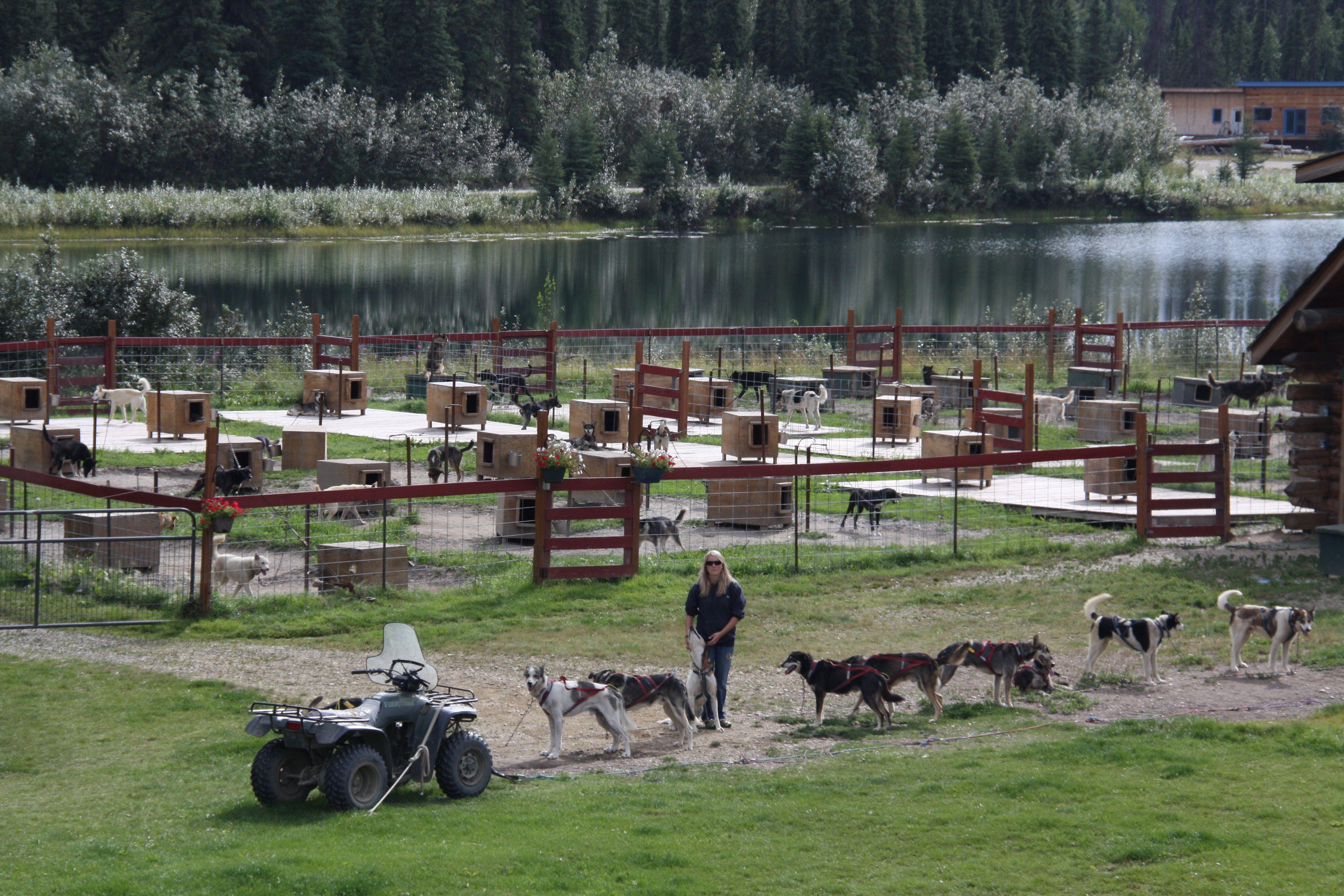 Sled Dog Training In Fairbanks Alaska Dog Sledding Fairbanks