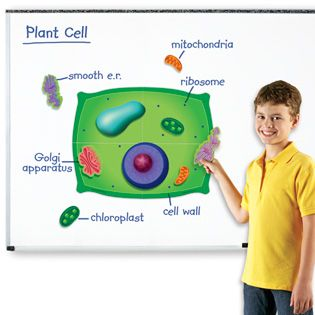 Magnetic plant cell again possible diy project as if theres time magnetic plant cell again possible diy project as if theres time for that ccuart Choice Image
