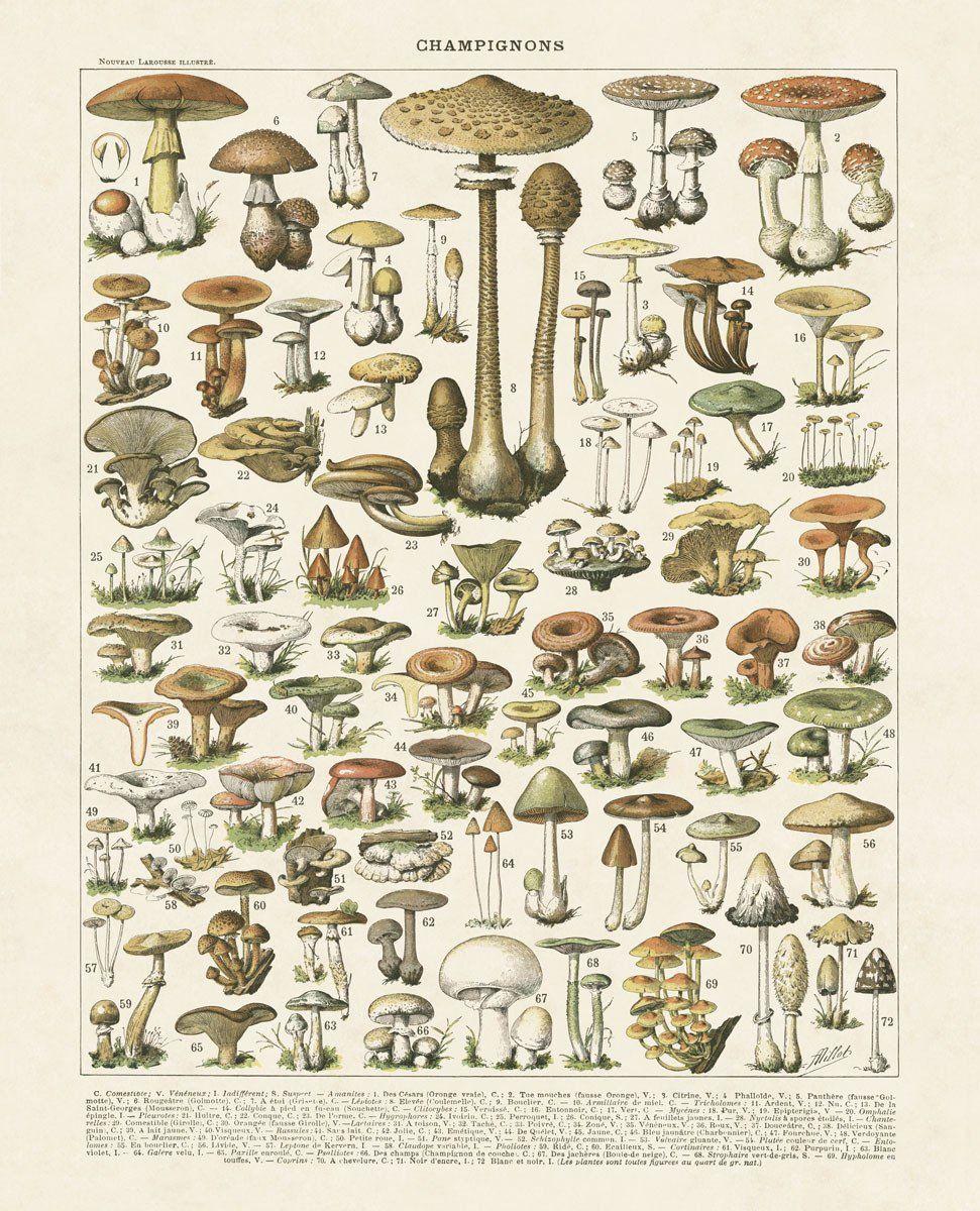 Vintage Edible Mushroom Chart iPhone 11 case