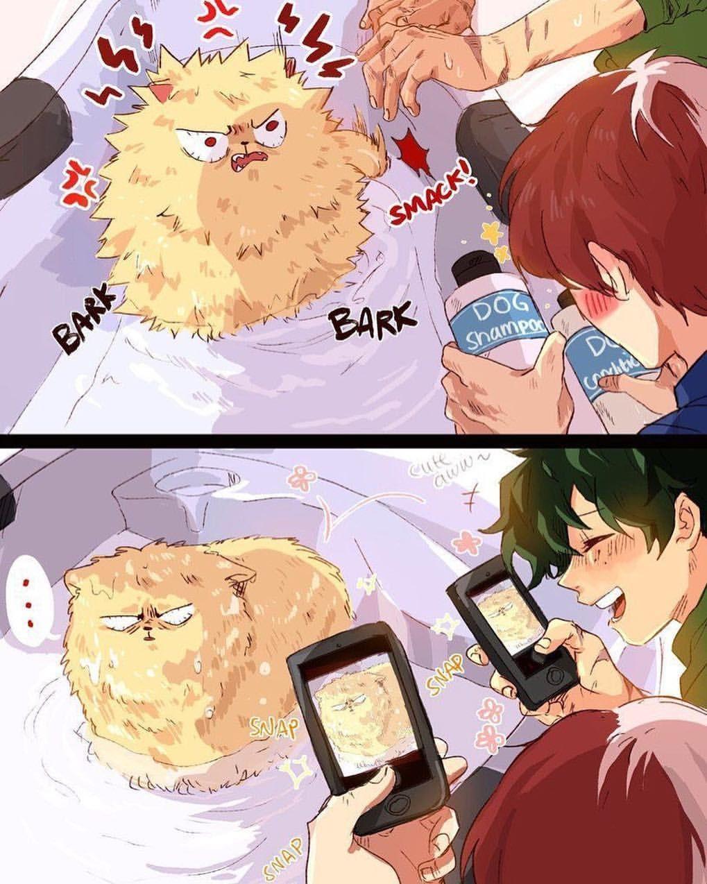 Awww Bakugou As An Angry Yippy Dog Is Adorable X Todobakudeku X My Hero Boku No Hero Academia My Hero Academia Episodes