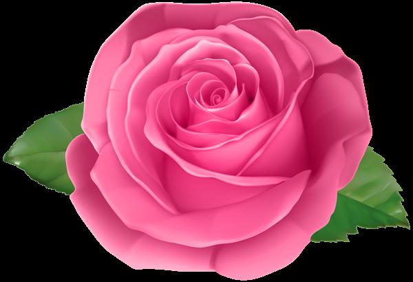 Rose Pink Transparent Png Clip Art Image Beautiful Flower Drawings Beautiful Rose Flowers Flower Art