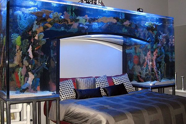 I dont know if I could fall asleep with the flying fishes in my