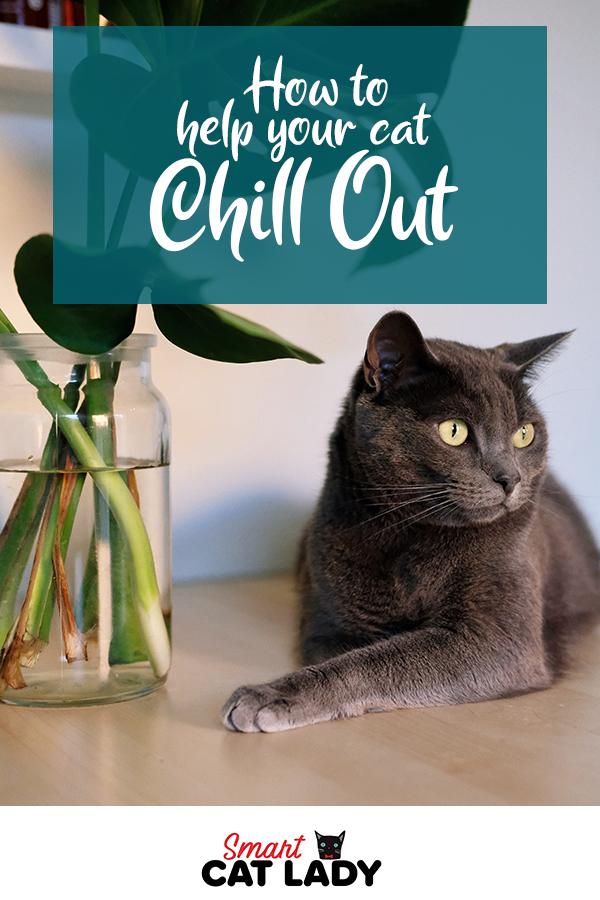 7e8d40a50406043a32cf45e4a187649e - How Do You Get A Cat To Calm Down