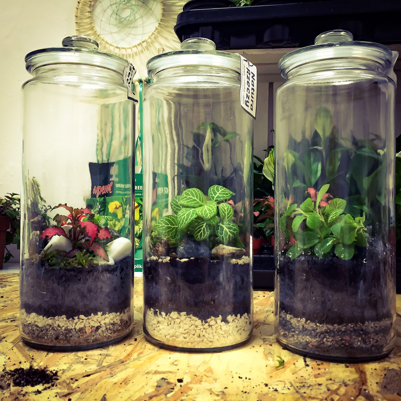 Plant In Glazen Pot.Plant In Glazen Pot Home Ideas Ideeen Voor