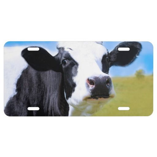 Cow License Plate Zazzle Com Cow Animals Methane