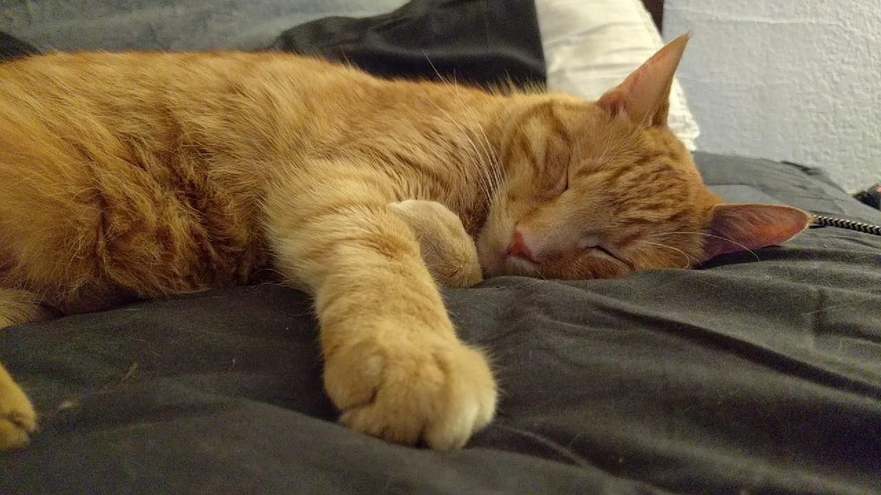 My little goober having a nap. http://ift.tt/2uzvKAO