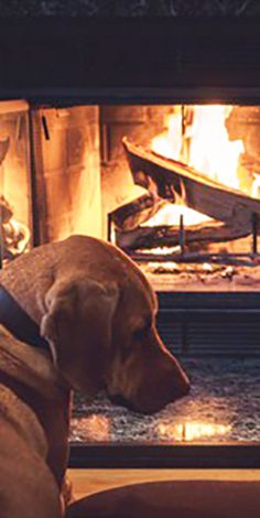 Does your BFF like to sit by the fire during the winter months? Scoot on over to Petcentric.com to see Eko and Penny duke it out for the best seat in front of the fireplace!
