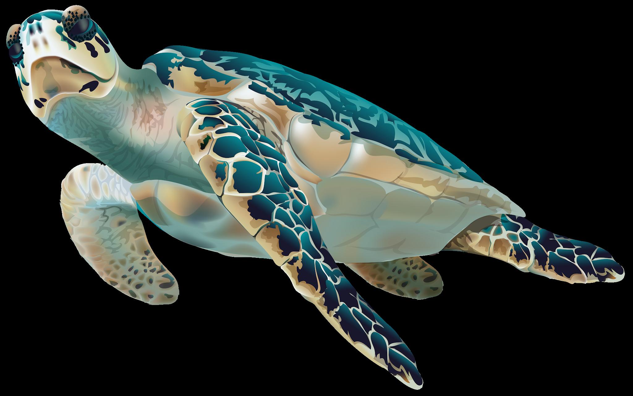 Sea Turtle Cartoon Turtle Png Image And Clipart Turtle Sea Turtle Cartoon Turtle
