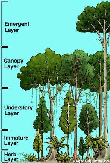 Unit 3 5 Great Kapok Tree