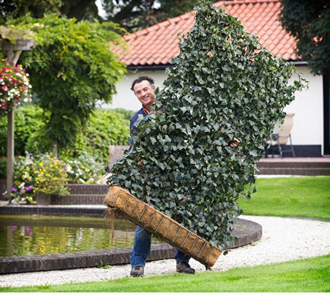 tuinafscheiding planten - Google zoeken