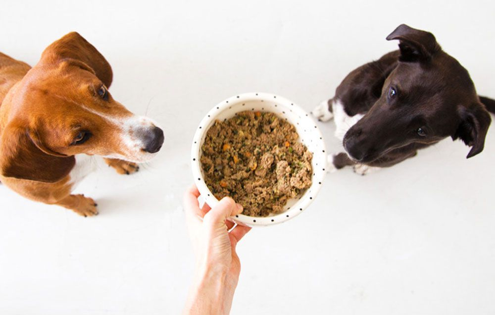 How To Choose A Legitimately Healthy And Safe Natural Dog