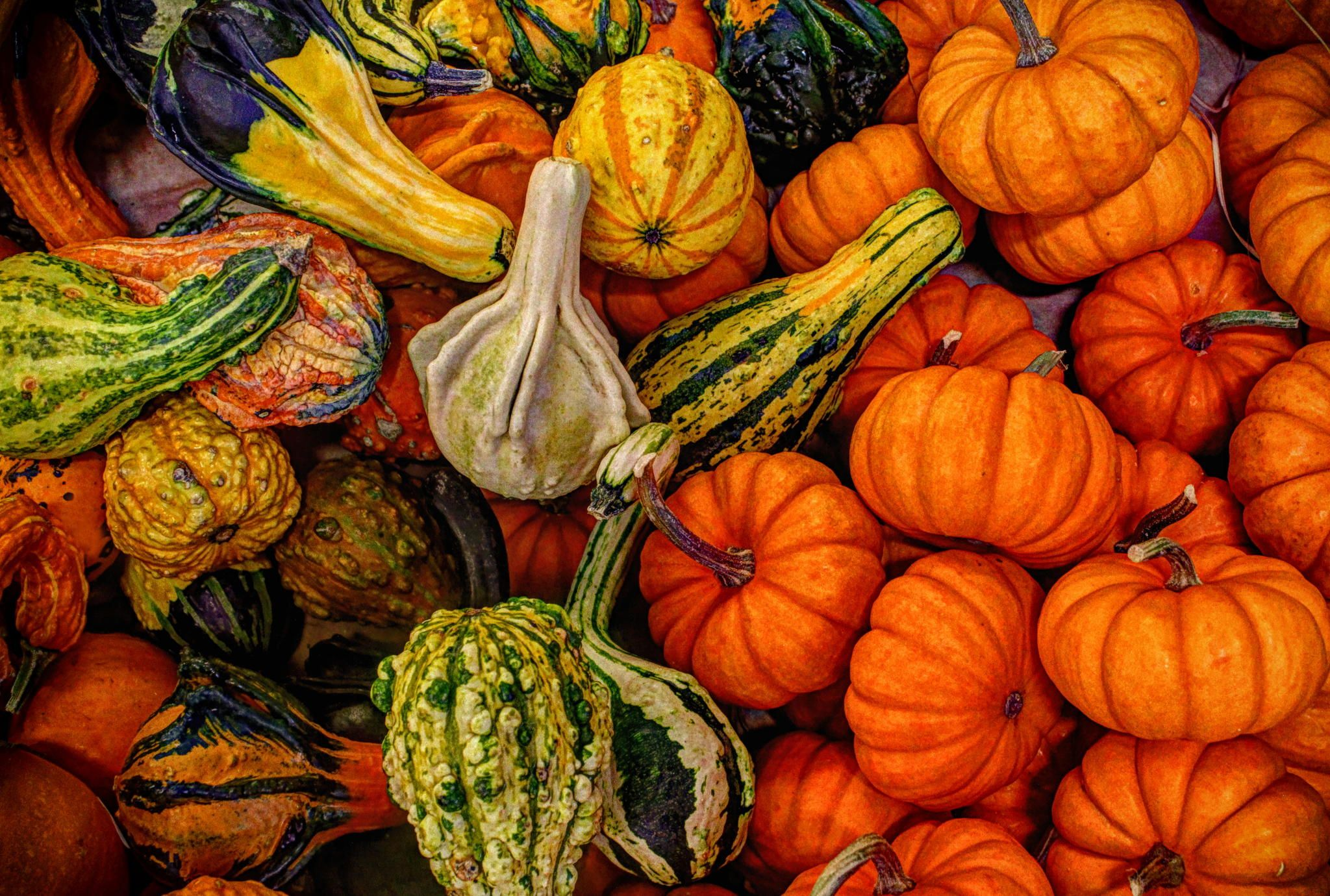 Gourds in the grocery store - My wife thought I should help with the shopping.