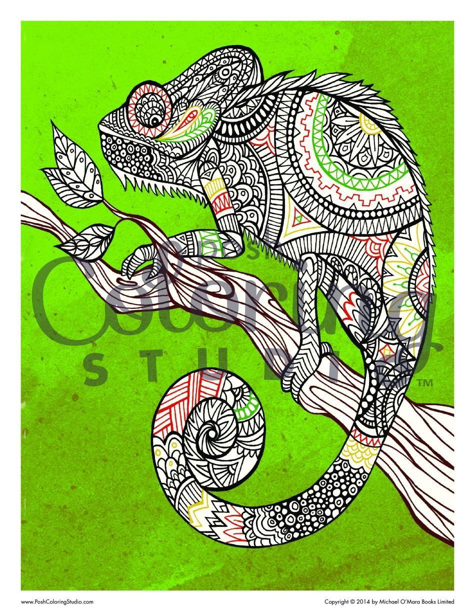 Chameleon Camouflage Coloring Page Posh Coloring Studio Animal