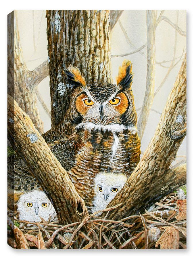 Ghosted Owls and Chicks in Nest