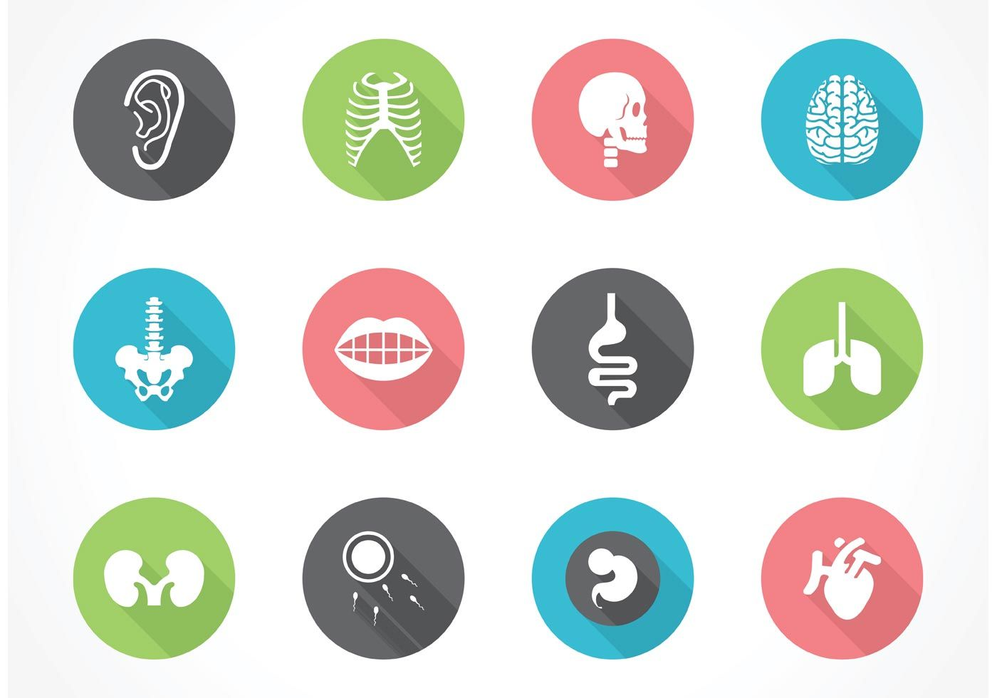 Free Vector Human Anatomy Icon Set | Medical Design | Pinterest ...