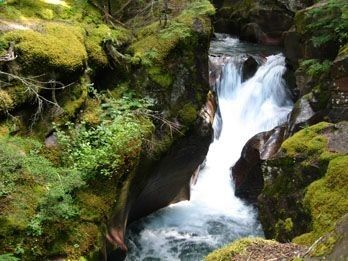 Waterfall on Avalanche Creek seen from the Avalanche Lake Trail... One of the many things to do at Glacier National Park! Love the outdoors? Head on a road trip, take your RV or just camping with the family :)