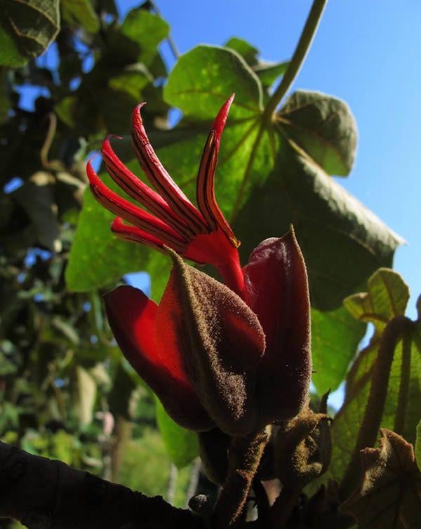 As 10 Flores Mais Estranhas Do Mundo Flores Estranhas Flores
