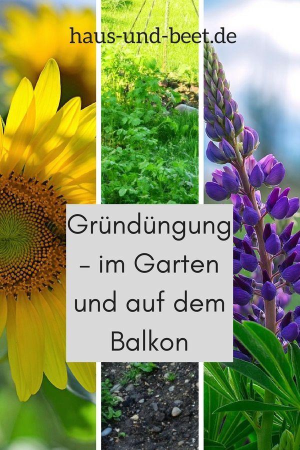 Grundunger Grundungerpflanzen Biologische Dungung Zwischenfrucht Gelber Senf Sonnenblumen Buchweizen Blaue Lupi Dunger Fur Tomaten Pflanzen Gartenarbeit
