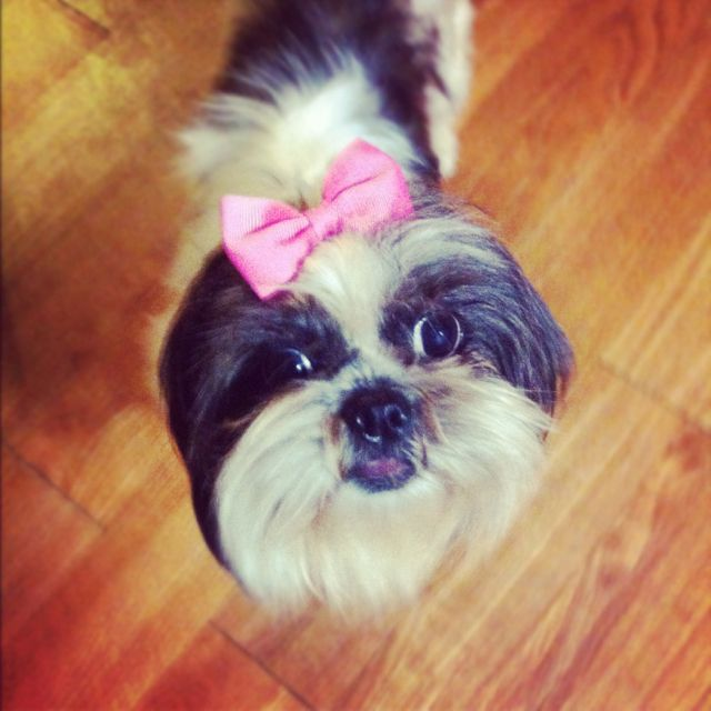 Prada and her Pink Bow