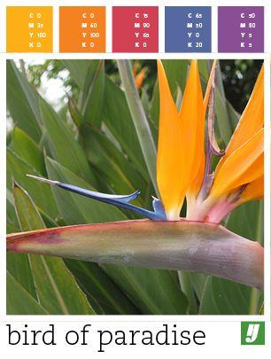 Color Palette Bird Of Paradise Birds Of Paradise Tropical Wedding Color Palette Bird Of Paradise Wedding