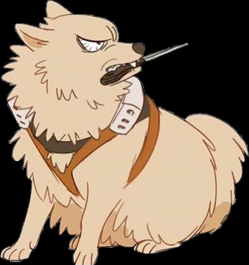 Bakugou And Pomeranian Google Search Mad Dog Pomeranian Animals