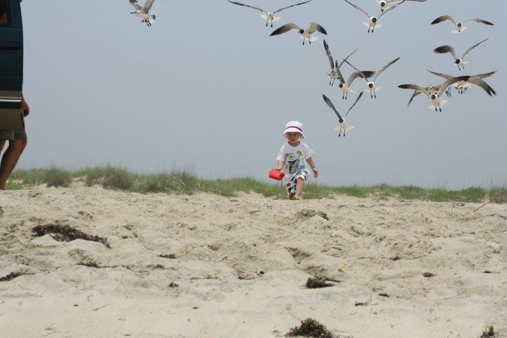 My grandson chasing Seagulls...he loved them!