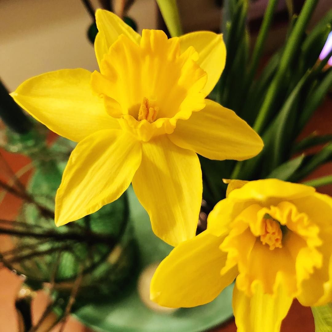 Shades Of Yellow Color Names For Your Inspiration Daffodils