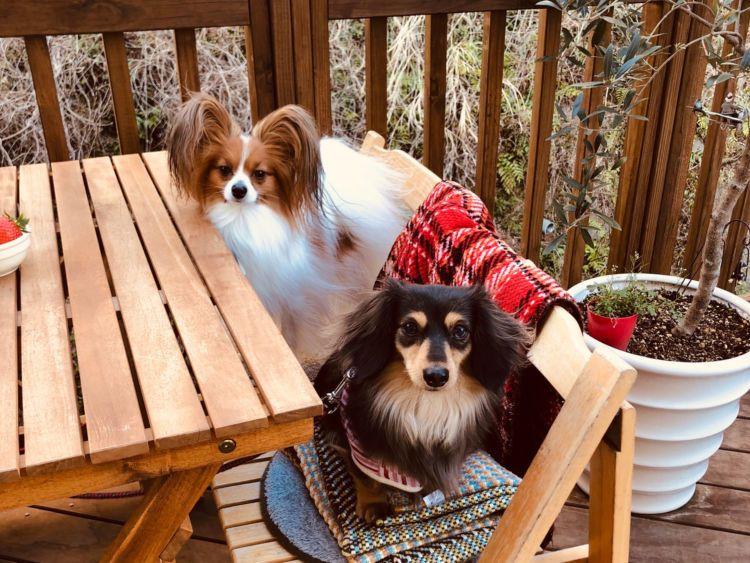 長野 愛犬と一緒に泊まれるペット可ホテル5選 おすすめスポットをご紹介 ペット 大型犬 愛犬家