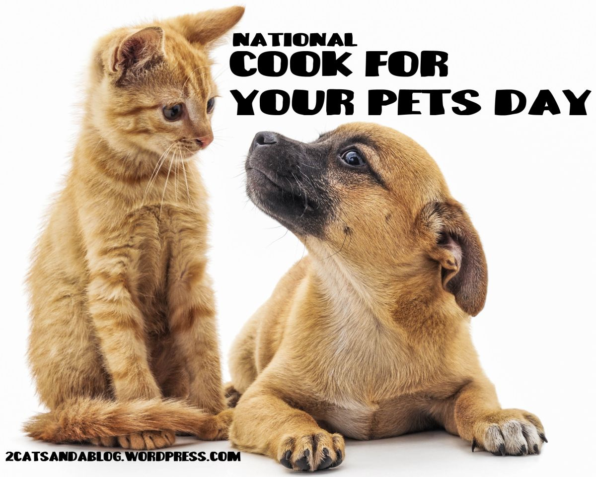 National Cook For Your Pets Day Pet Day Pets Cute Animals