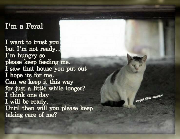 Pin By Dixie Williams On Sayings Feral Cats Animals Cats