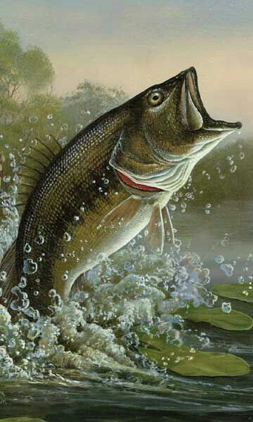 Pin By Elaine Standridge On Painting To Paint Fish Fish Painting Bass Fishing