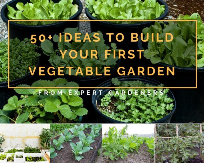 50+ Ideas To Build Your First Vegetable Garden   A Green Hand