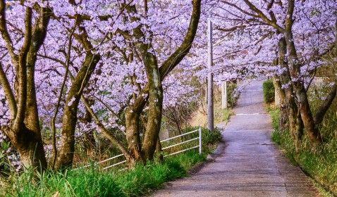 primavera, parque, flores, árboles