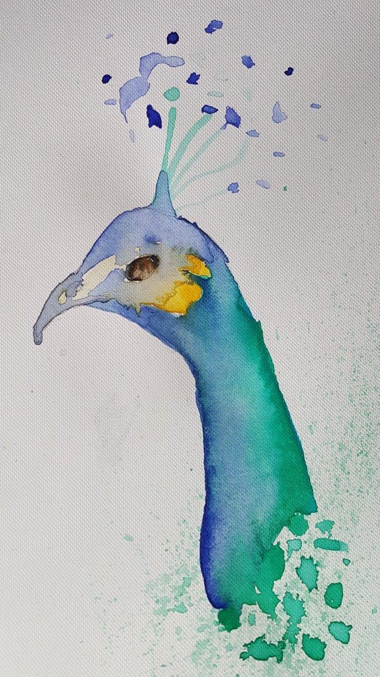 Paon Aquarelle Cool Drawings Drawings Art