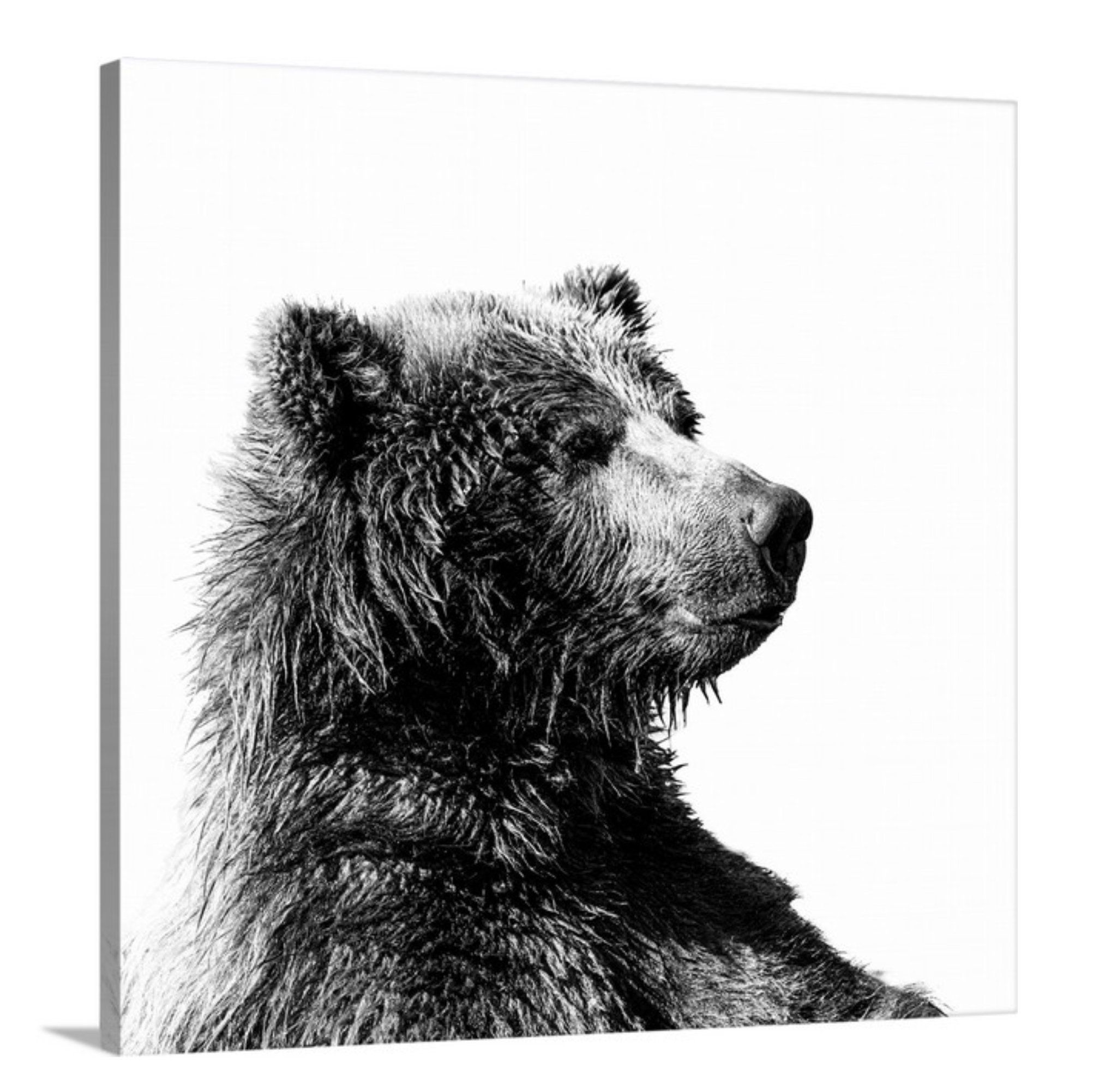 Oversize Wall Art Grizzly Bear Canvas Grizzly Bear Print Etsy Bear Print Oversized Wall Art Grizzly Bear