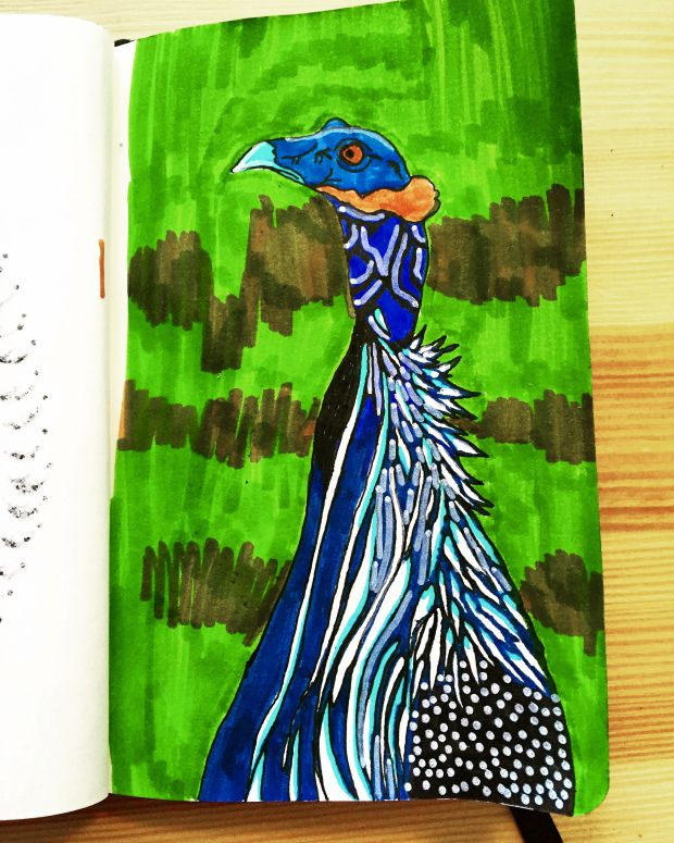 Vulturine Guineafowl: An Animal of Interest by Arpita Choudhury via The Science of Illustration