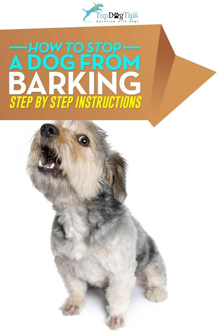 How To Stop A Dog From Barking A Video Guide Top Dog Tips Training Your Dog Easiest Dogs To Train Stop Dog Barking