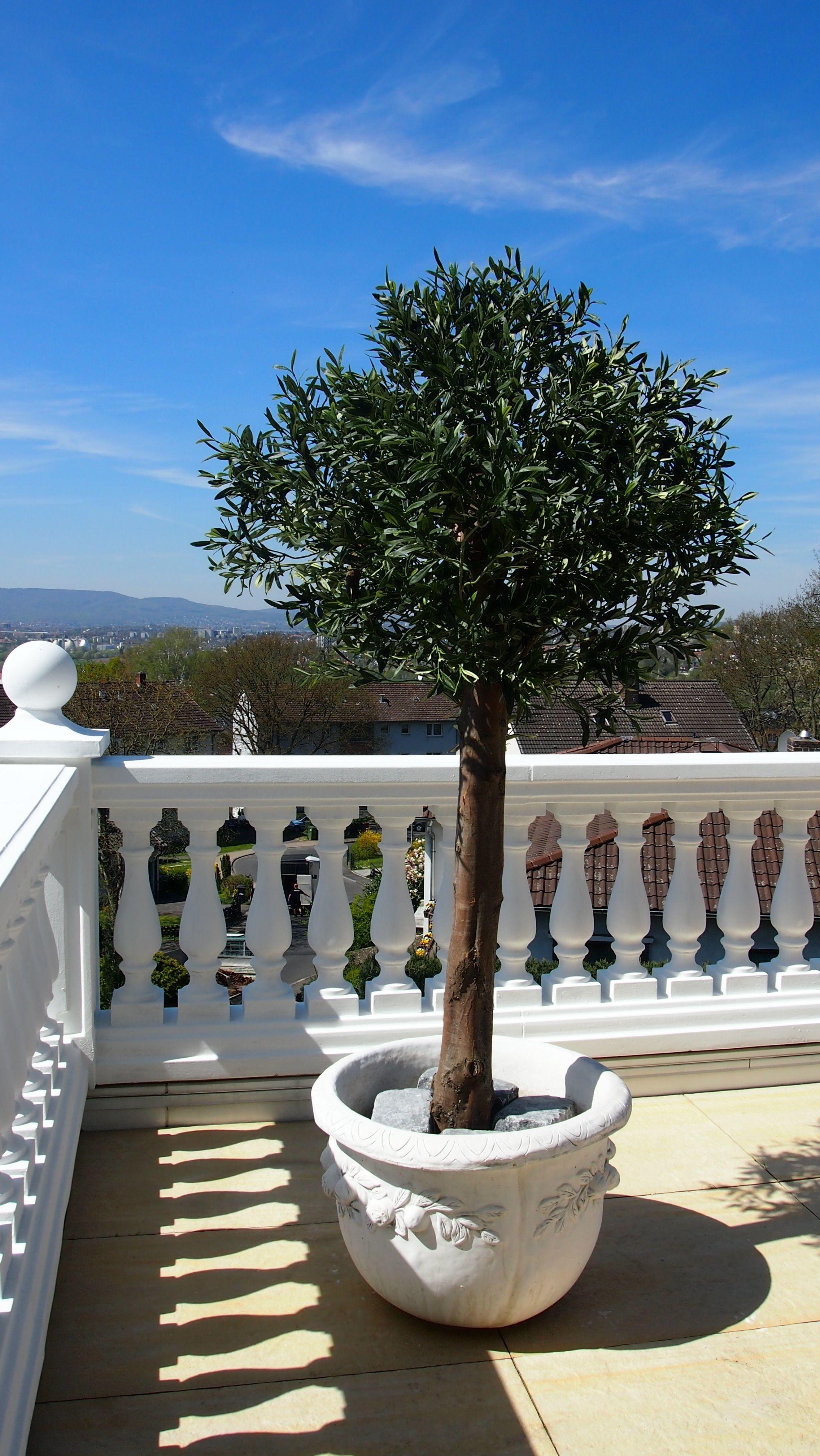 Wetterfester Künstlicher Olivenbaum Von Bellaplanta Krative