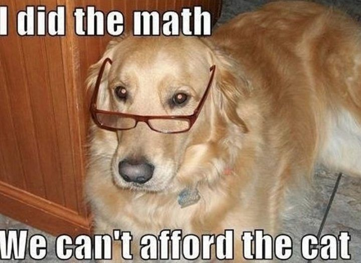 101 Best Funny Dog Memes To Make You Laugh All Day Funny Dog Memes Funny Dog Pictures Dog Memes