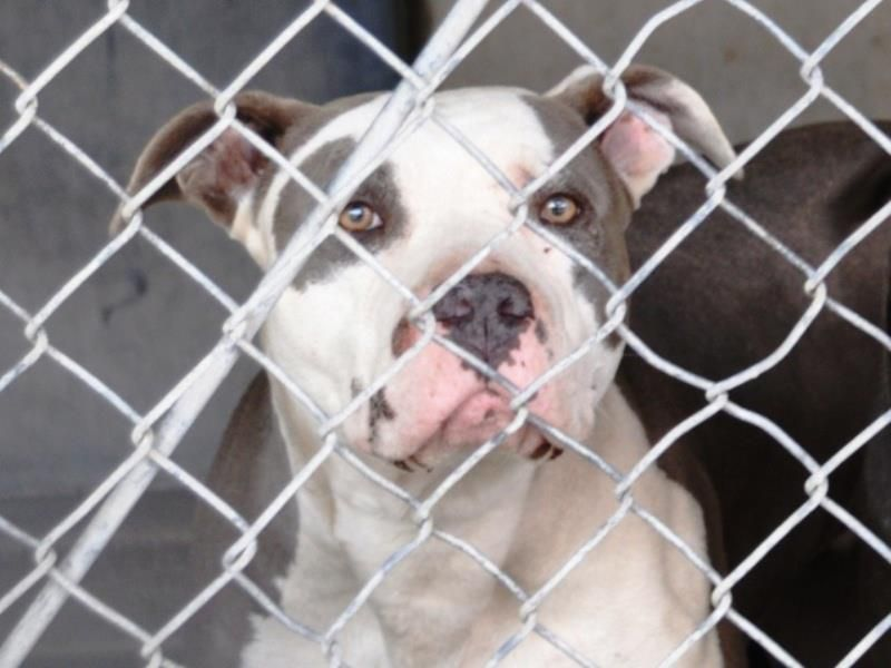 DUE OUT 5 DAY'S AGO EXTREMELY URGENT PRISCILA ID