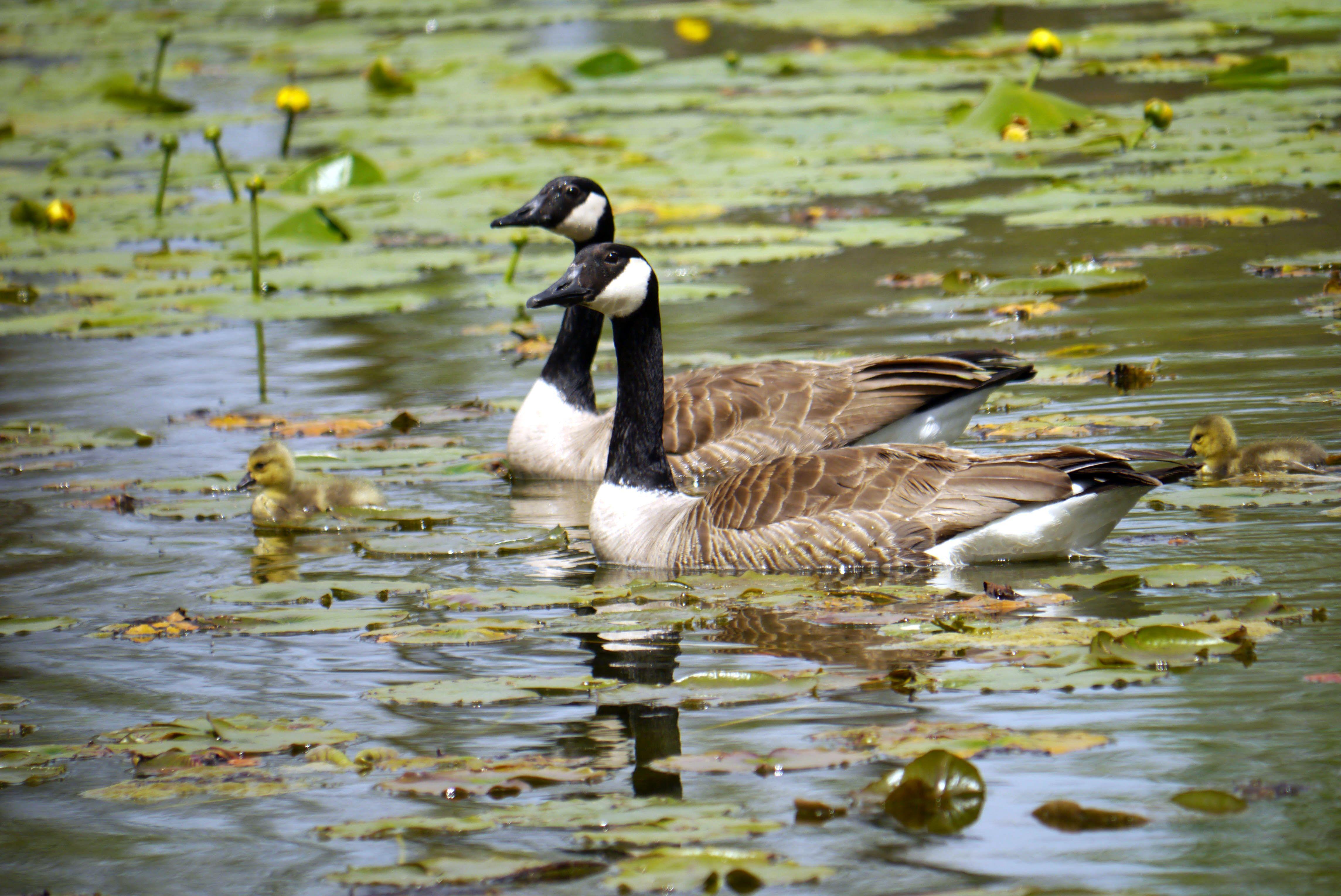 canada goose store holland