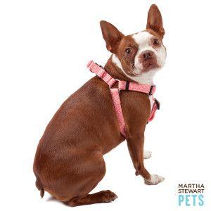 Martha Stewart Pets Bone Harness Petsmart Dog Personality Pet Accessories Your Dog